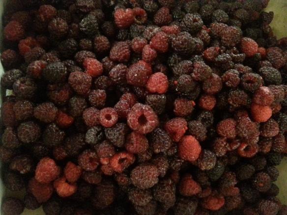 Raspberries1
